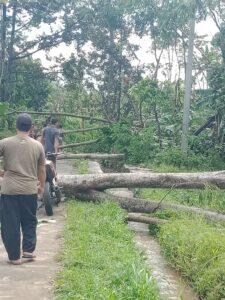 26012021_-_Penampakan_pepohonan_dampak_dari_puting_beliung_di_pasrujambe