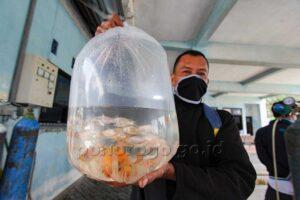 Pandemi-Permintaan-Benih-Ikan-untuk-Kolam-Rumahan-Meningkat-1