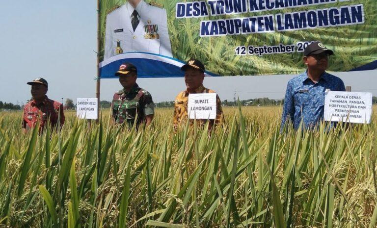 pertanian-lamongan-1068x646