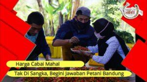 Cabai Mahal, Para Ini Komentar Para Petani di Bandung
