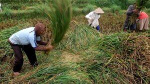 ketahanan-pangan-pertanian-1
